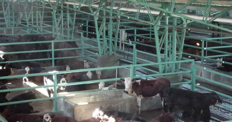 Se deben hacer dos verificaciones en los animales, hay una parte ante mortem y una parte post mortem, en ambas el animal debe calificar con los controles de sanidad