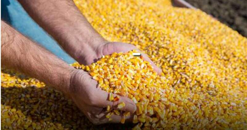 En el mercado internacional continúa la baja en los precios de los principales granos; mientras que el cereal cerró en U$S244 por tonelada.