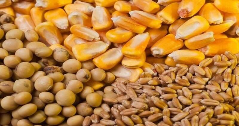 Fuerte caída de la soja y el maíz en Chicago