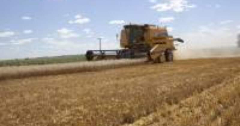 El área sembrada supera las 8 millones de hectáreas y también hay buenas perspectivas para la gruesa