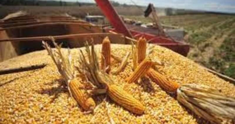Con 50,5 millones de toneladas cosechadas, la campaña 2020/21 se posicionó como la tercera de la serie histórica