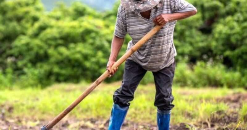 Se estableció el régimen de compatibilización del trabajo rural registrado con la recepción de planes sociales bajo las modalidades de trabajo temporario