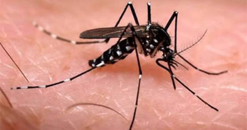 Dengue: advierten por contagios autóctonos