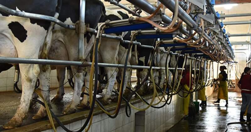 CREA indicó que en los primeros 8 meses del año la producción láctea fue de 7.244 millones de litros, lo que significa un aumento en la producción del 3,9% respecto al 2020