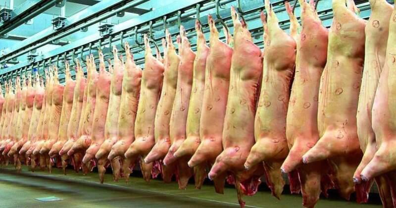 Por débil demanda china y baja en precios caen exportaciones de cerdo