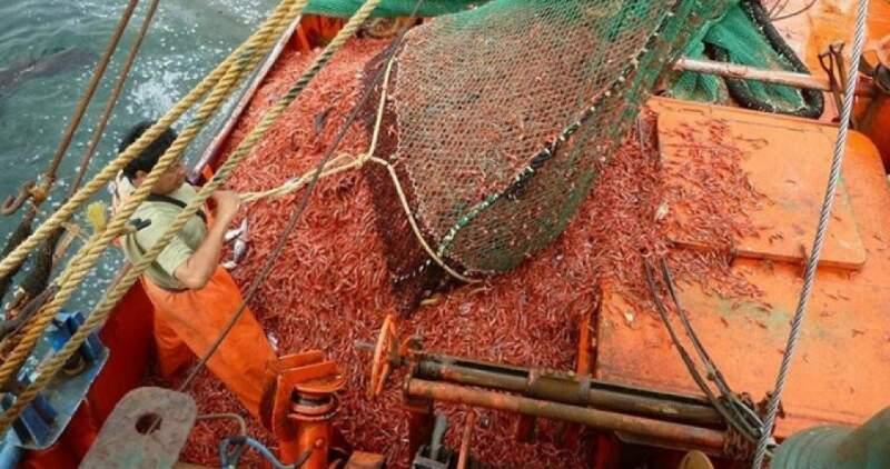 Las exportaciones del sector pesquero medidas en cantidades experimentaron una suba del 6,3%